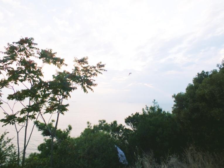 photo 4 (21)